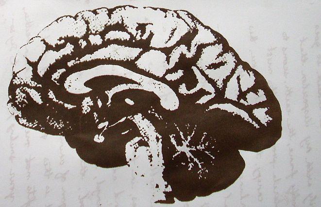 интересные факты о мозге